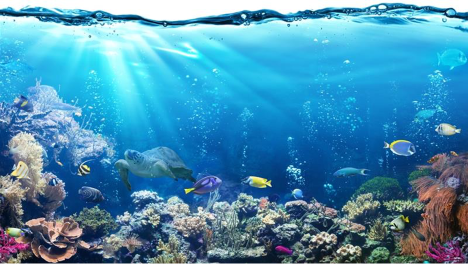 How our Oceans are Vital to all Life on Earth and What Can be Done to Protect Them