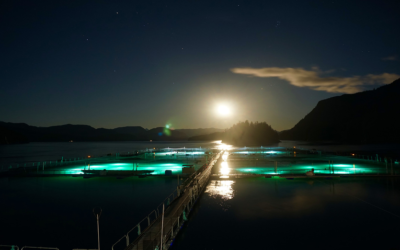 Shedding Light on The Situation: Examining the Use of Lighting in Salmon Fisheries